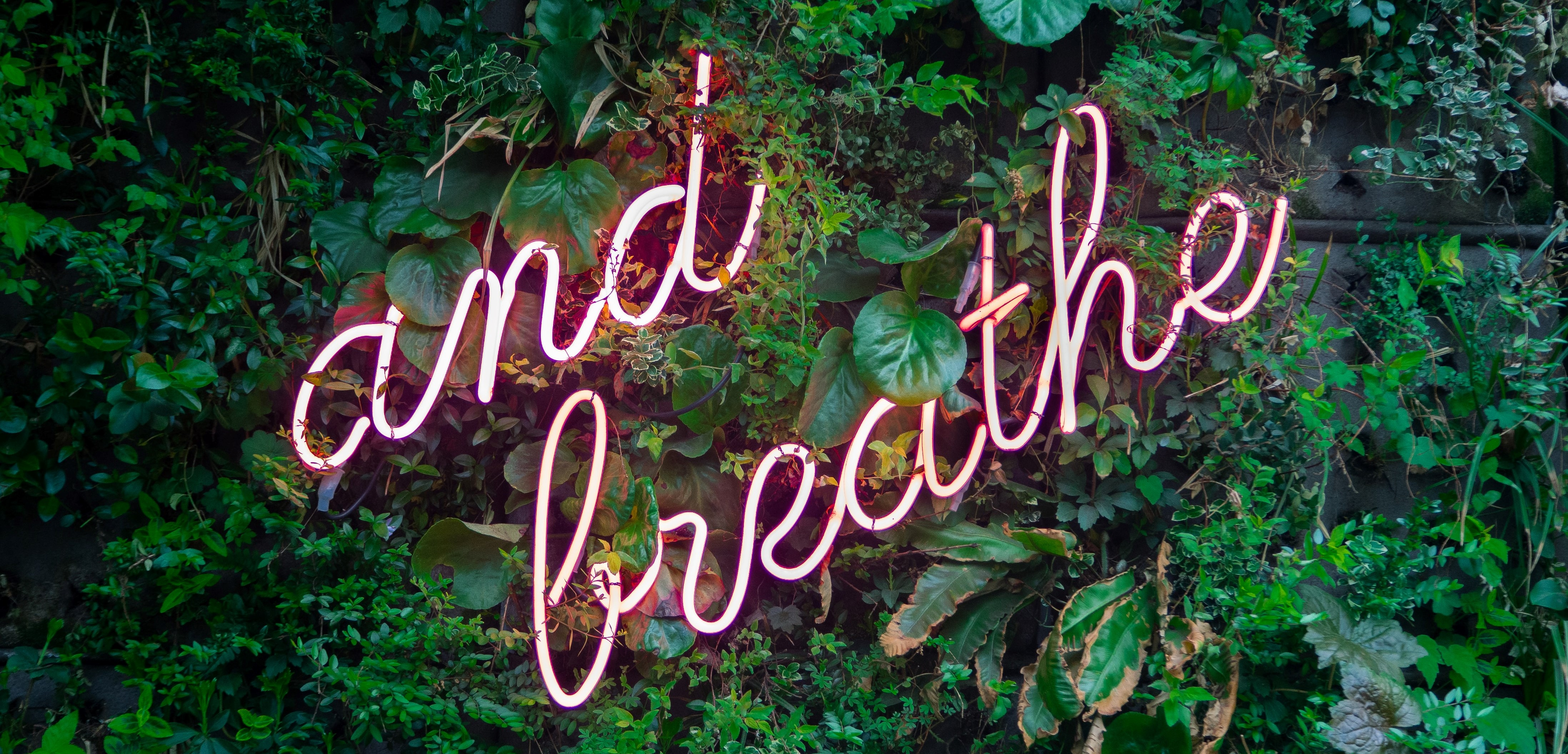 """""""and breathe"""" written in pink text against green leaves"""